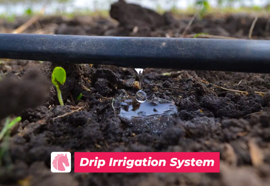 Pakistan could easily save water by using drip irrigation method