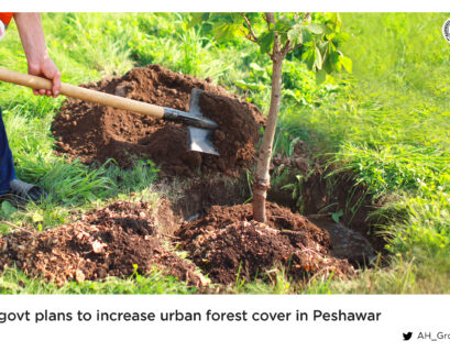KP govt plans to increase urban forest cover in Peshawar